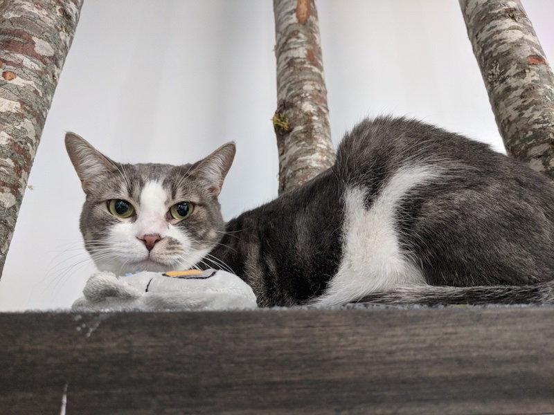 6 Factor to keep in mind Before Delivering Your Cat to Boarding