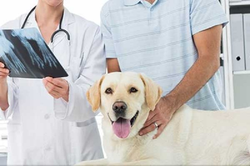 Professional Veterinary Debt Collection Can Ease The Unpaid Amount