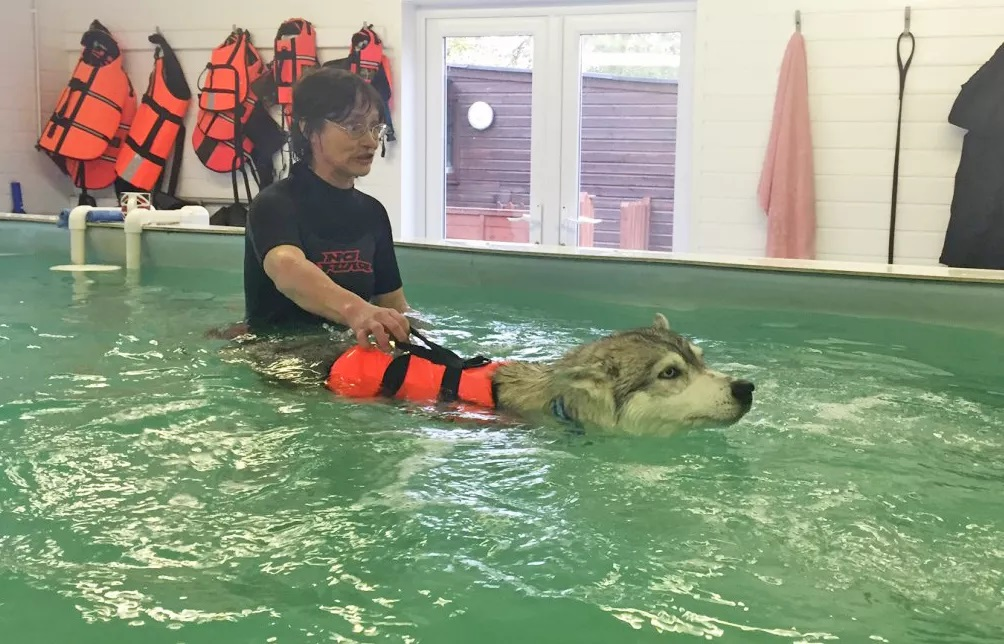Hydrotherapy Helps with Humans, Horses and Now Dogs and Smaller Animals