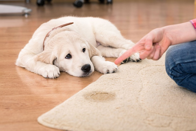 New Product to Keep Urinary Infections with Pets a Thing of The Past