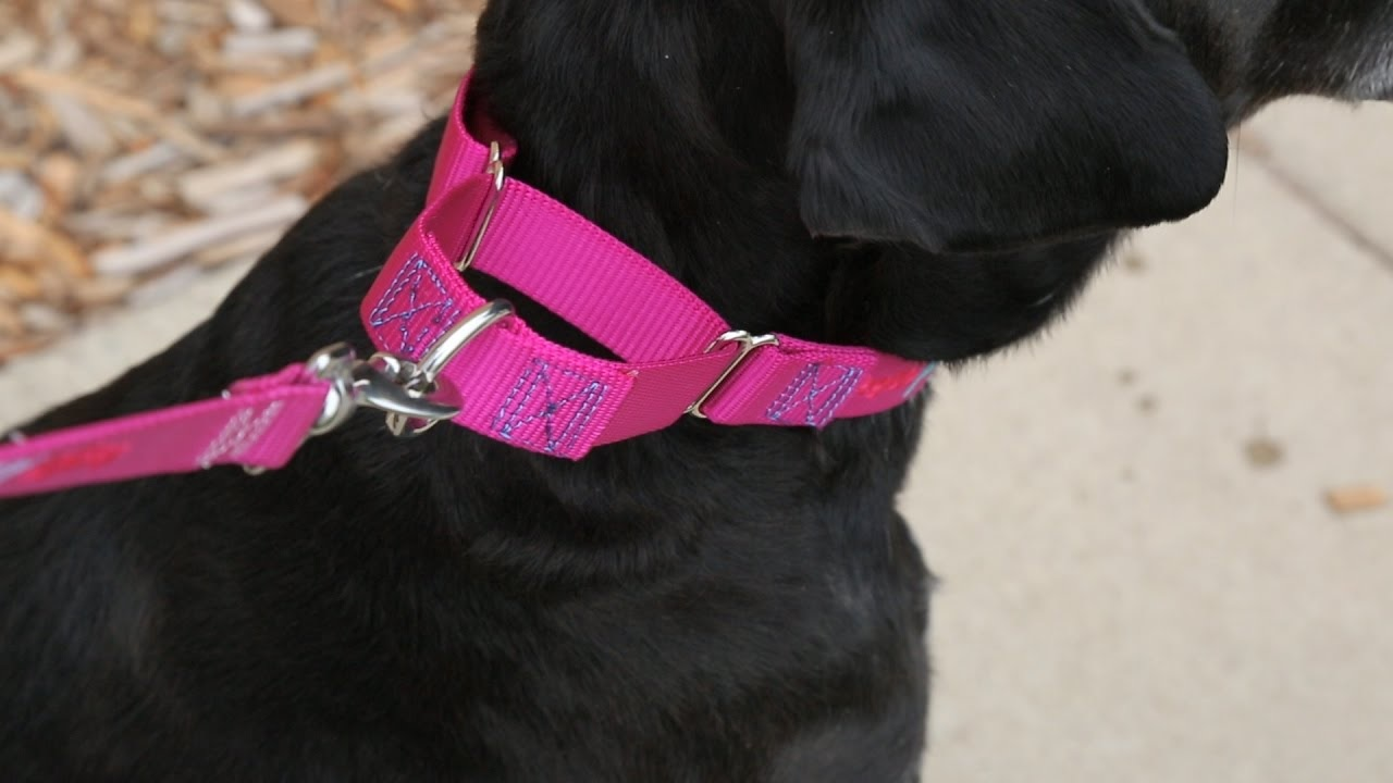 Get Your Dogs Collar Customized To Add That Special Touch