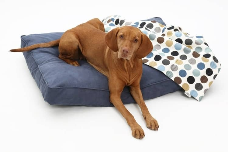 Purchase a Dog Bed for Comfort and Convenience of your Dog