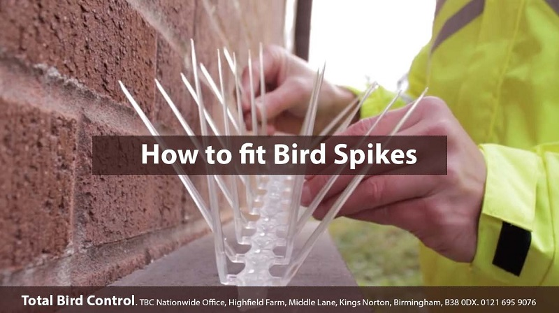 How to install bird spikes?