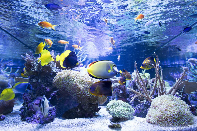 Marine Corals and a Word on Saltwater Tanks