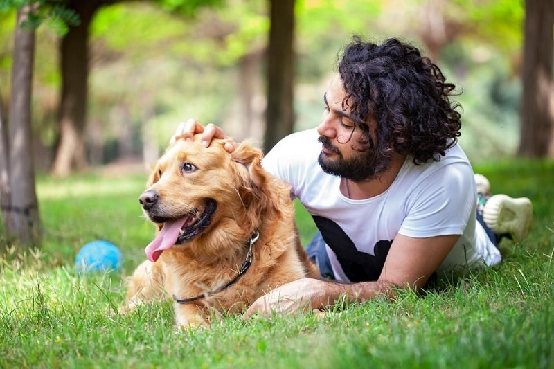 Why dog owners opt for doggy insurance plans?
