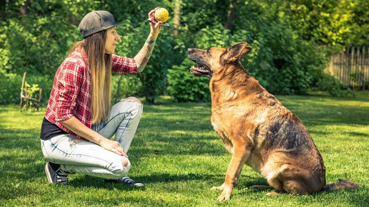 Why You Need to Train Your Pet Dog?