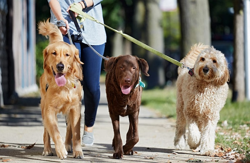 Protect Your Dog Walking Business With The Proper Dog Walker Insurance