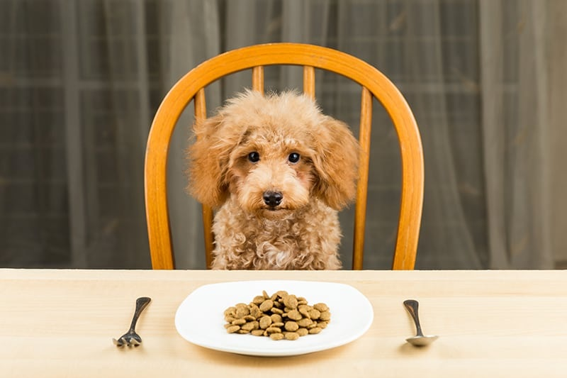 Enhanced Your Knowledge On The Best Food For Labradoodles