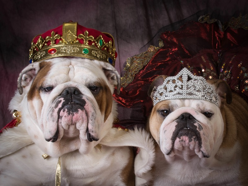 These royal pet portraits are really fun. If you're looking to commission a royal pet portrait of your dog then this site is perfect