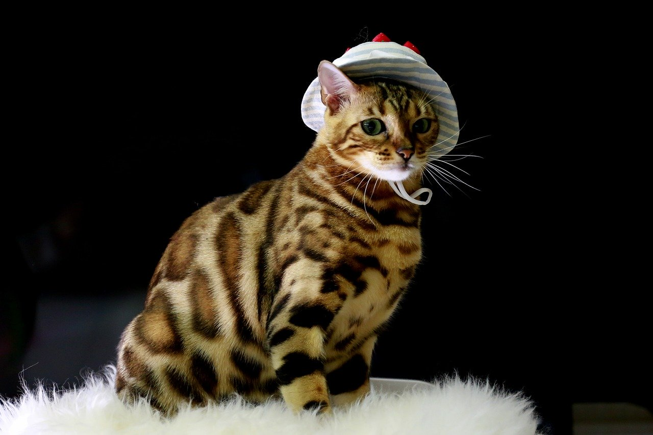 Bengal Cats: The Exotic Hybrid Feline