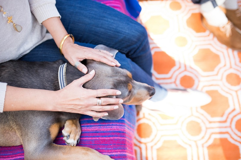 Reiki For Dogs Anxiety – Decoded Today