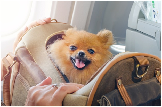 Choose the best pet carrier for your canine buddy – how?