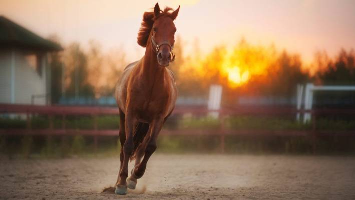 3 Ways To Minimize Horse-Related Injuries