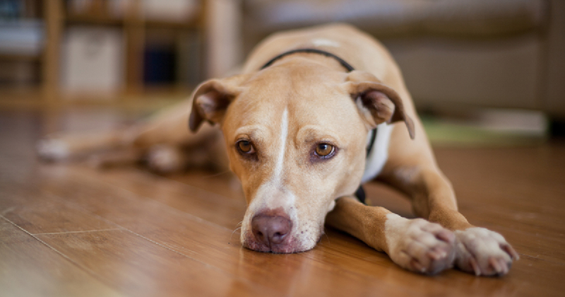 How Do I Know If My Pet Is Suffering From A Heat Stroke?