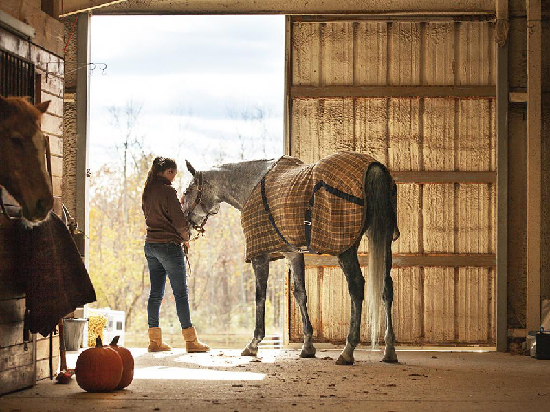 Getting a Horse? 3 Hidden Expenses That You Need to Prepare For