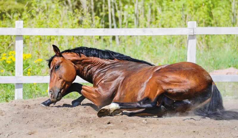 What To Do if Your Horse Gets Colic