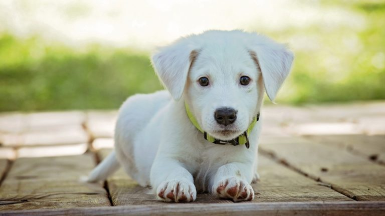 Finer Options for the best Puppy Purchase Now