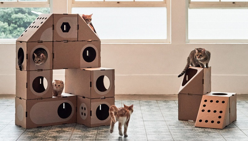 What Are The Things You Should Look For Before Buying The Perfect Cat house?