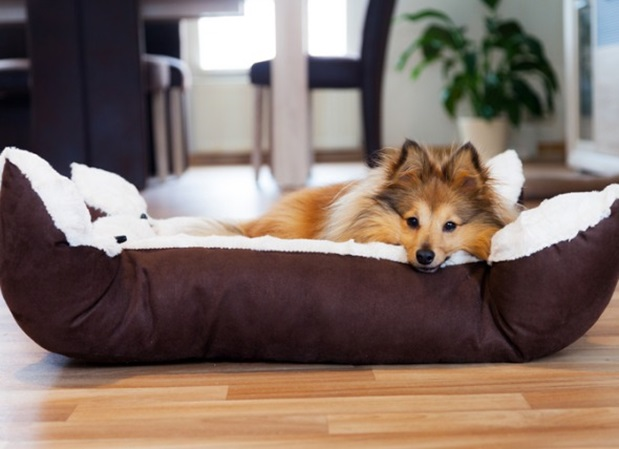 Can You Really Find a Great Dog Bed on the Web?