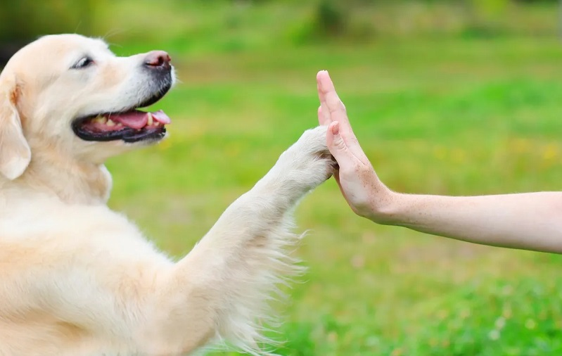Consult Dog Psychic Denver To Understand Your Dog Better