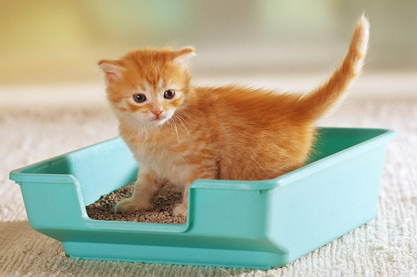 Understanding Problems In Your Cat's Litter Box