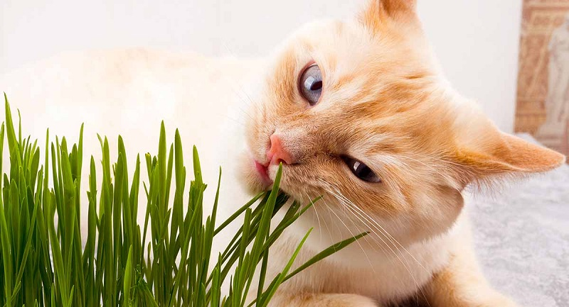 How can catnip benefit your feline friend?