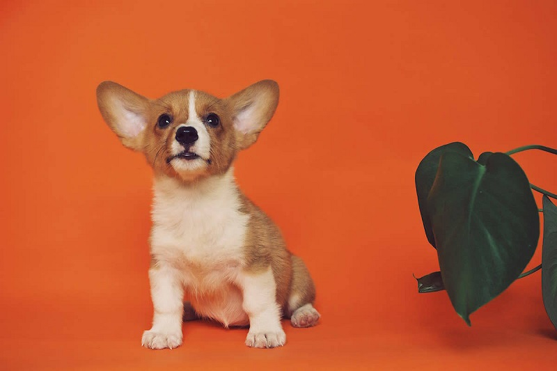 Why pet portraits can be the best gift for pet lovers?