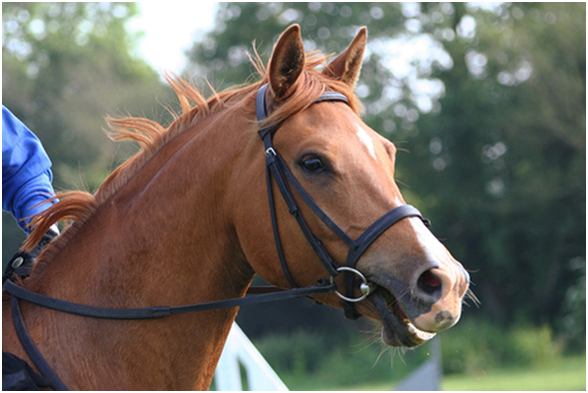 Everything To Know About Bridles