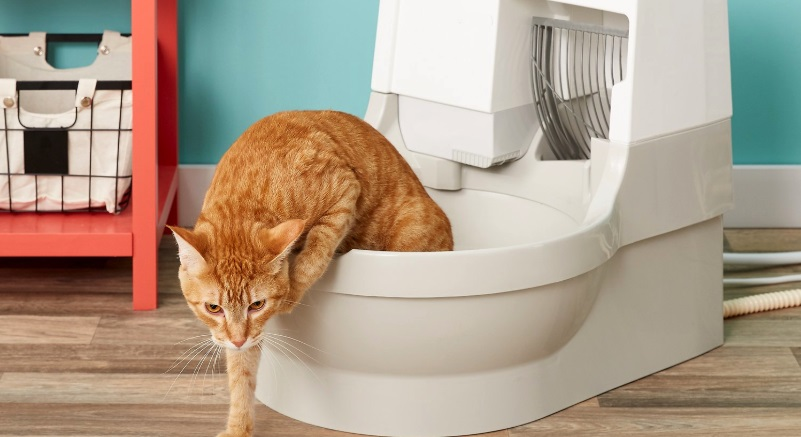5 Best Automatic Litter Boxes for Preventing Odors