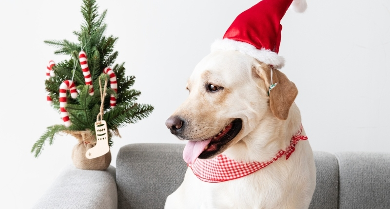 Getting Your Dog Ready for Holiday Guests