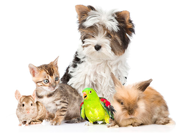 Moving? Get These Referrals ASAP To Your Pet