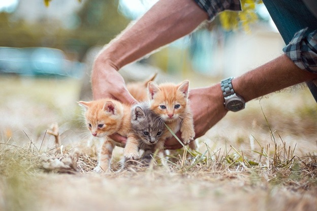 Things You Need to Know Before Starting a Cat Shelter