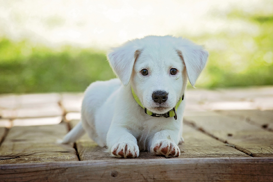 4 Costs of Dog Ownership Rarely Discussed