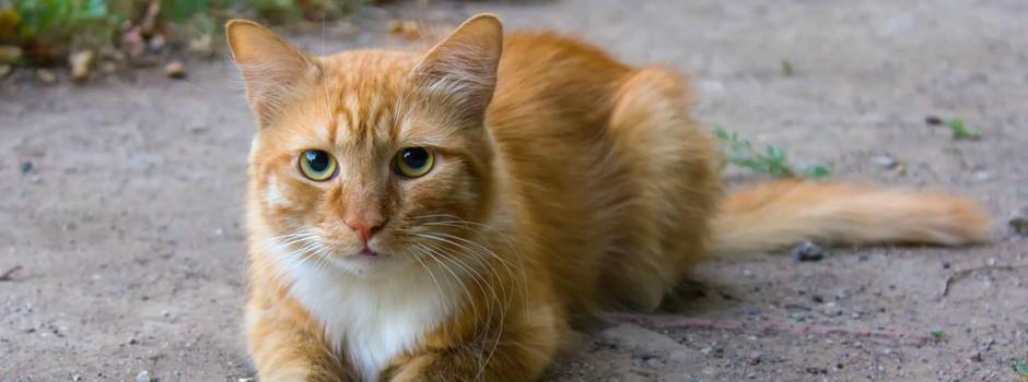 I Found a Stray Cat! What Do I Do?