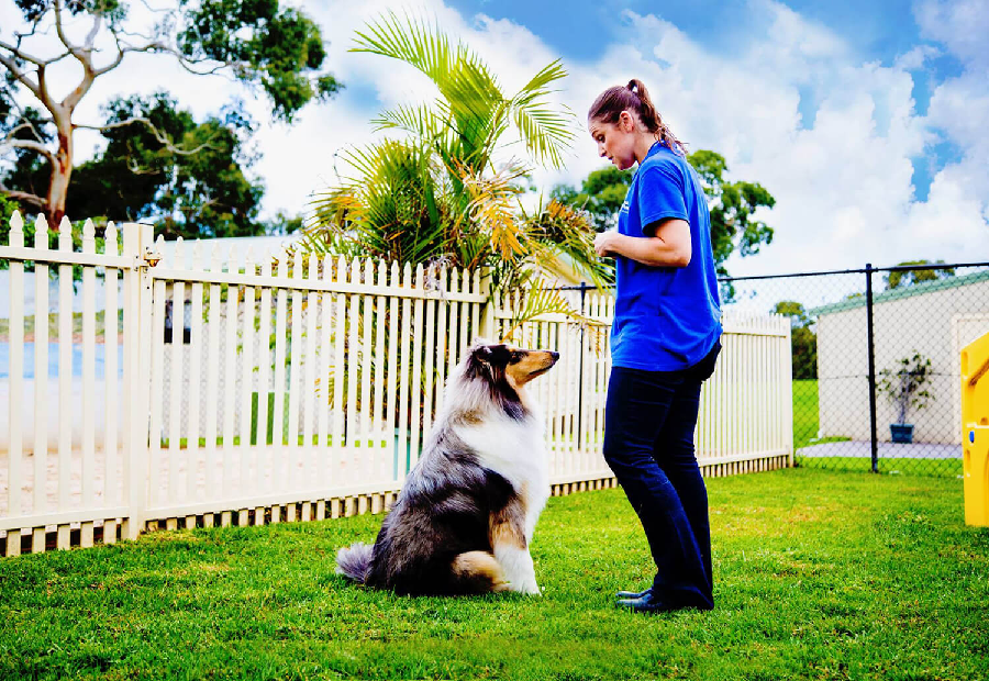 A Complete Guide on Choosing a Great Dog Trainer