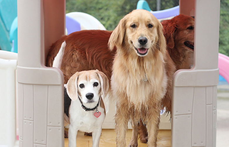 What should I look for in a doggy daycare?