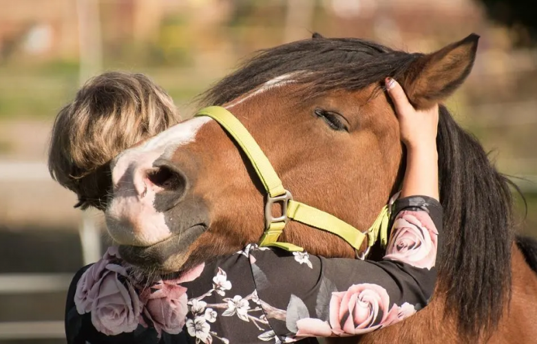 Top 3 Things People Don't Know About Owning a Horse